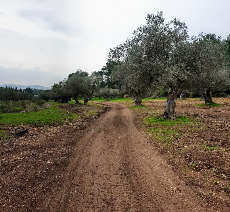 ריצת שטח יער אחיהוד